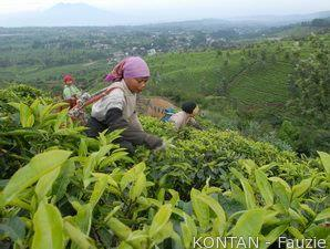 Fasilitas Pph Bidik Investasi 41 Usaha Pertanian