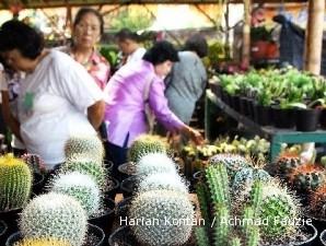 Kaktus Mini Makin Unik Dan Langka Makin Mahal 2