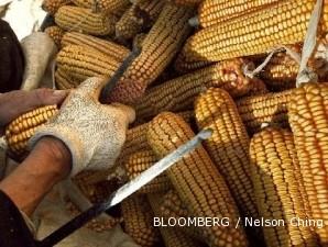 Impor jagung 2010 naik 275% dibanding tahun lalu
