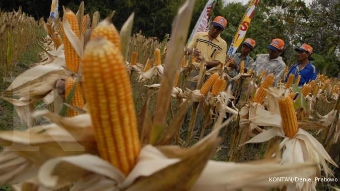 Tahun 2013, pemerintah berikan subsidi benih