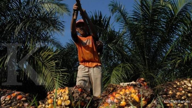 ETWA bangun pabrik CPO di Kalimantan Barat