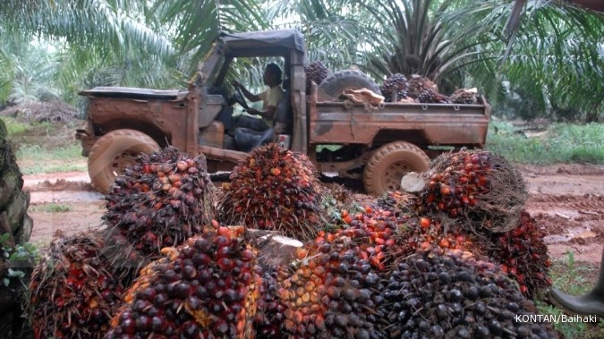 ANJT Uni Eropa perketat impor sawit, Austindo (ANJT) lirik pasar China dan India