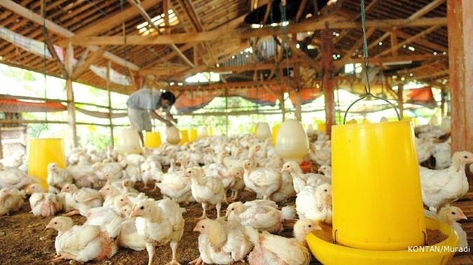 Pemerintah Waspadai Virus Flu Burung