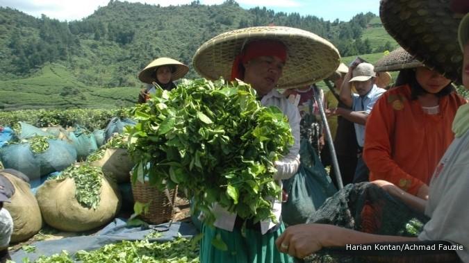 KBPN dan Unilever kerjasama jual beli teh