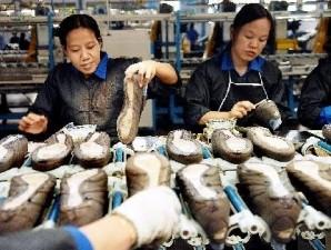 Sebanyak 17 investor asing buka pabrik sepatu di Indonesia tahun ini a268d8950d
