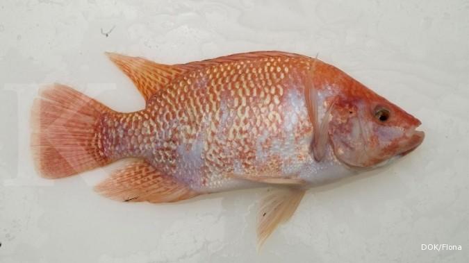 Kkp Kembangkan Jenis Ikan Untuk Air Payau