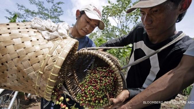Lampung perkenalkan kopi jenis fine robusta