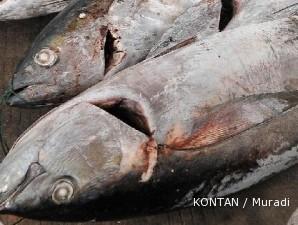 Harga tuna menyusut, 800 kapal nelayan berhenti berburu tuna