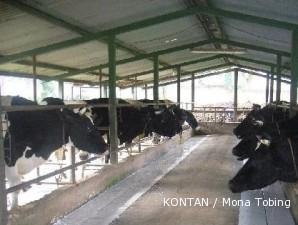 Sentra susu Lembang: Peternak ramai-ramai minta harga susu naik (4)