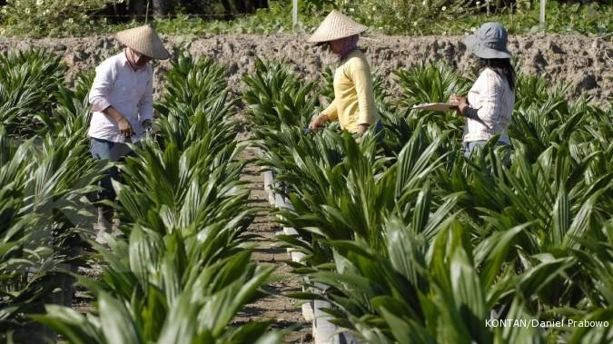 Dami Mas kerek produksi benih sawit jadi 12 juta