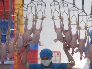Rumah potong ayam siap memacu produksi