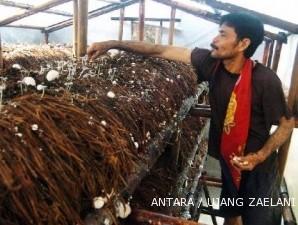 Sentra jamur Cilamaya: Petani jamur ingin pasar mengembang (3)