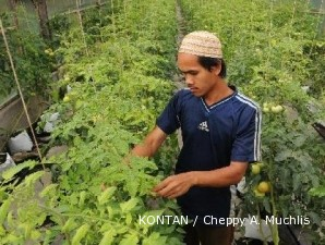 Sempat anjlok, harga tomat kembali beringsut naik