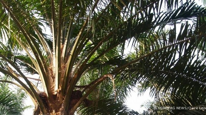 LSIP PTPP Laba bersih anjlok 95,3%, PP London Sumatra (LSIP) targetkan produksi CPO tumbuh 5%