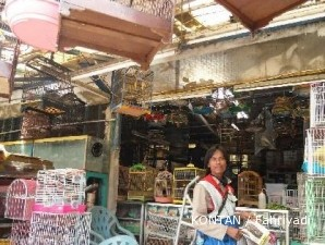 Sentra burung Kelapa Gading: Pasar burung yang utamakan kebersihan (1)