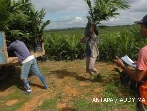 Pembibitan sawit: Benih bibit perusahaan perkebunan lebih berkualitas (2)