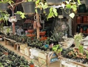 Sentra tanaman Kelapa Gading: Koleksi lengkap (1)