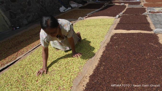 Wah! harga cengeh petani mencapai Rp 140.00/kg