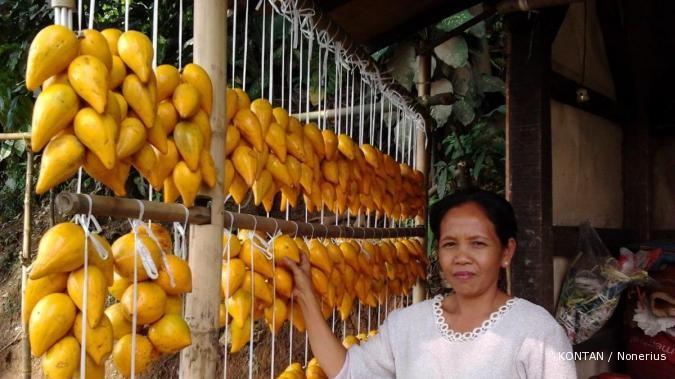 Bertandang ke sentra buah langka alkesa (1)