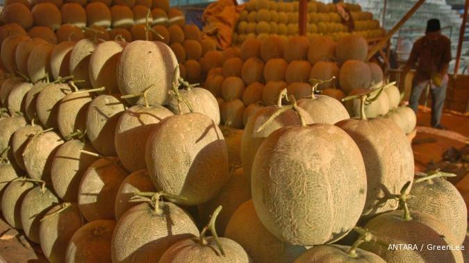 Bisnis manis dari melon ladika (1)