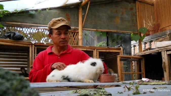 Anggrek tak laris, petani beralih ternak kelinci
