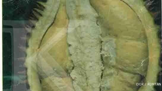 Sambung pucuk lahirkan si durian musang king (2)