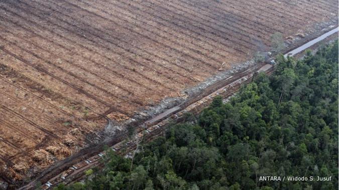 Peta moratorium hutan hasil revisi keluar Oktober