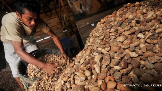 Buah pinang:  Semudah menanam pohon kelapa (2)