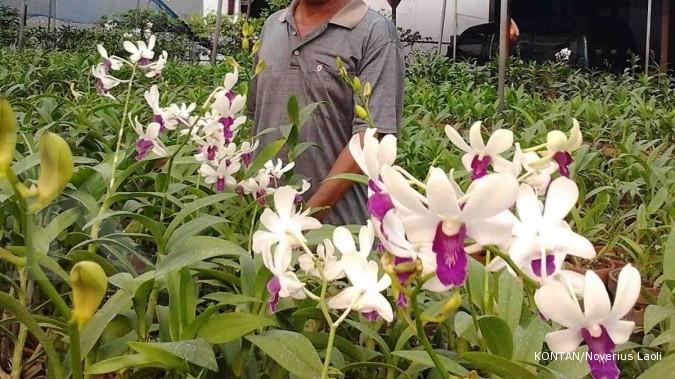 Sentra Anggrek: Banyak petani jual lahan (3)