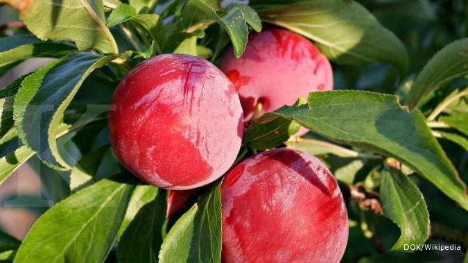 Makan buah ini bikin tulang lebih kuat 20%