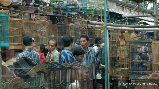 Pasar Pon, Ambarawa, Jawa Tengah kesohor lantaran koleksi burungnya