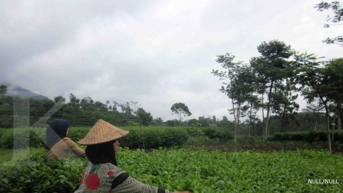 Harga teh dalam negeri terus naik