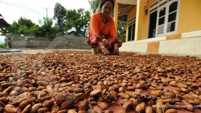 Kenaikan harga kakao tak menguntungkan petani