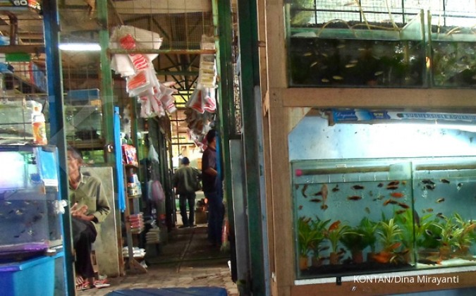 Pemasaran ikan hias tersendat jasa ekspedisi