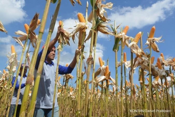 Penjualan benih Monsanto tumbuh 368%