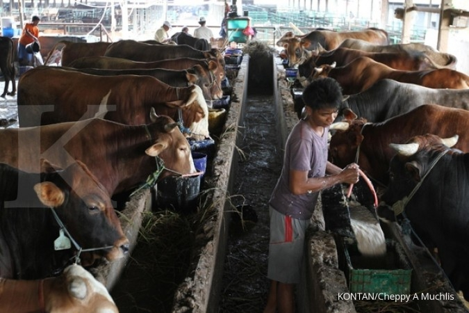 Bisnis ternak sapi Dharma Jaya mulai jalan 2018