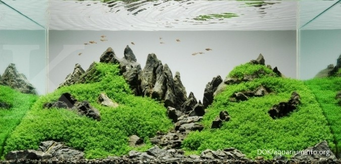 Mengenal Dua Gaya Aquascape Paling Populer