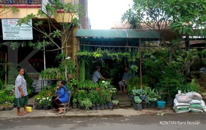 Memburu pusat tanaman hias di Solo (1) 5540eca6f3