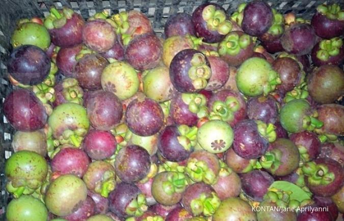 Kementerian Pertanian prediksi ekspor manggis bakal meningkat