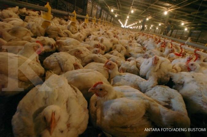 JPFA MAIN CPIN Tiga saham emiten poultry, CPIN, JPFA, MAIN masuk 10 besar top gainers, Jumat (5/7)