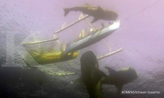 Ikan paus pembunuh terlihat di perairan Gorontalo
