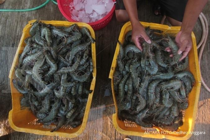 Forum Udang Indonesia optimistis nilai ekspor udang bisa meningkat 250% di 2024