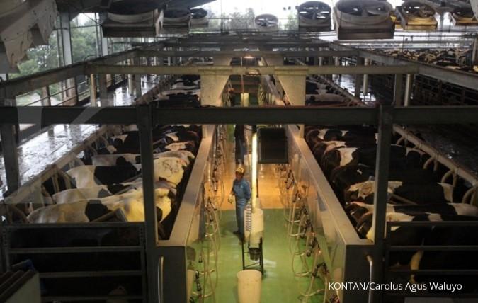 Ribuan sapi tiba di peternakan Greenfields