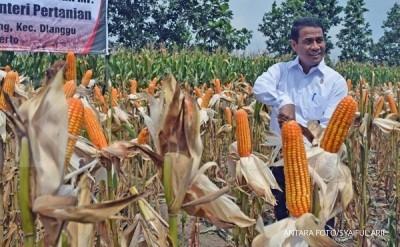 Mentan pastikan tidak ada lagi impor jagung
