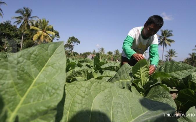 APTI: Diversifikasi tembakau bisa matikan petani