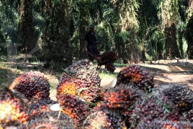 Sawit menggeser Letak minyak kedelai & nabati