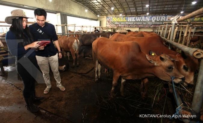 Harga sapi naik 20% menjelang Idul Adha