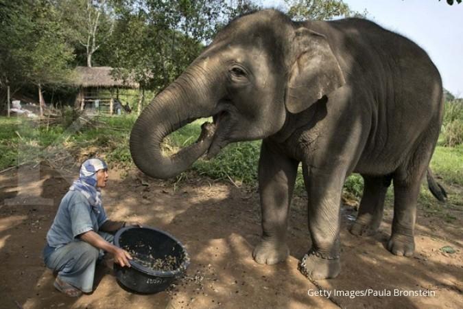Kabar gembira, bayi gajah lucu lahir di Way Kambas