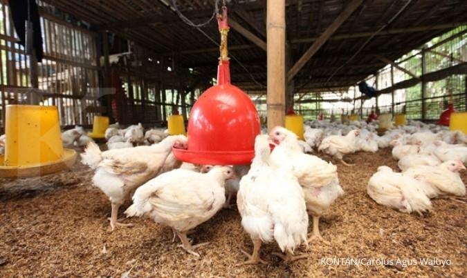 Harga ayam dan telur di tingkat peternak membaik