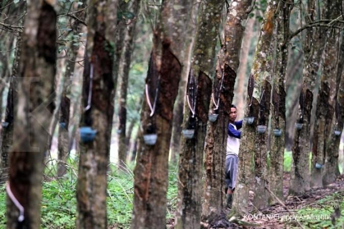 Dekarindo sebut batasan luas lahan untuk usaha perkebunan untuk pemerataan